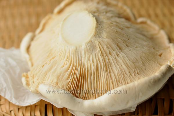 Abalone Cap Mushroom